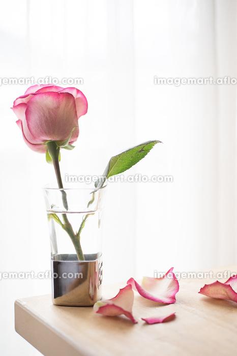 花瓶とピンク色のバラの販売画像