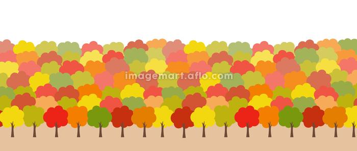 秋の紅葉 風景の販売画像