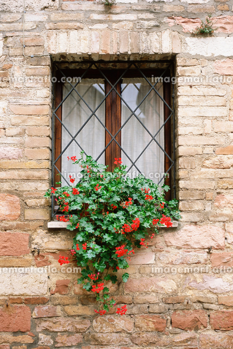 Red flowers on a window