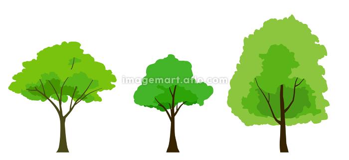 緑木のイラストセットの販売画像