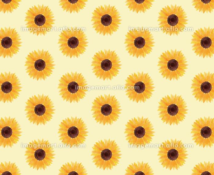 ひまわり ヒマワリ 向日葵 模様 黄色 夏 花 イラスト 手描きの販売画像