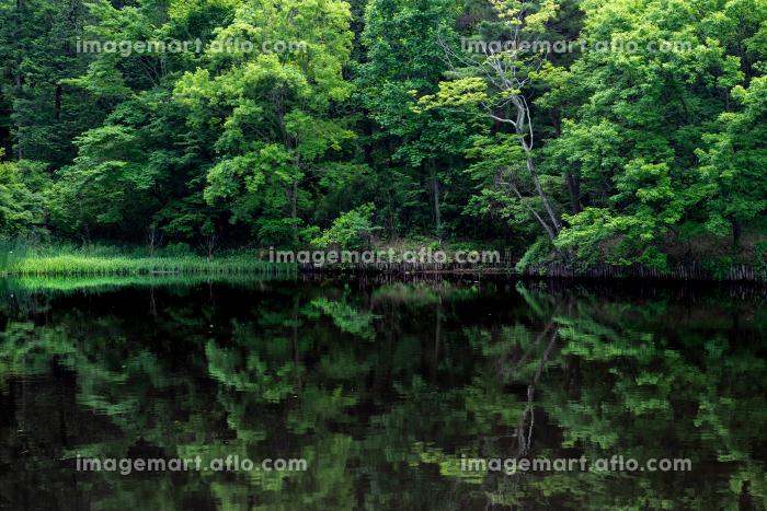 初夏の森と池 狭山公園の宅部池 6月の販売画像