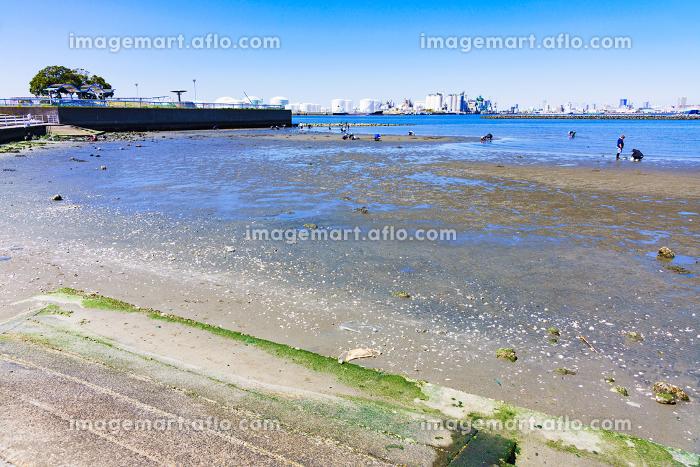 潮干狩り 春 風景 千葉港 千葉市 日本 青空 行楽 休日 レジャー アウトドア ビーチ 砂浜 海岸の販売画像