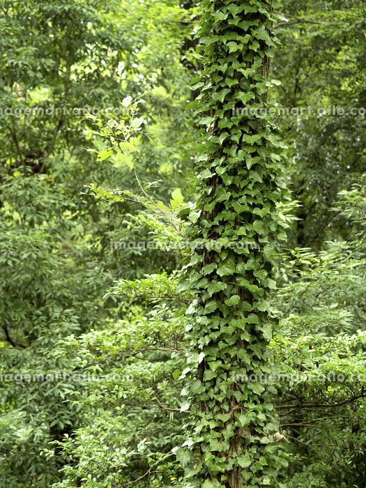 初夏の雑木林の販売画像