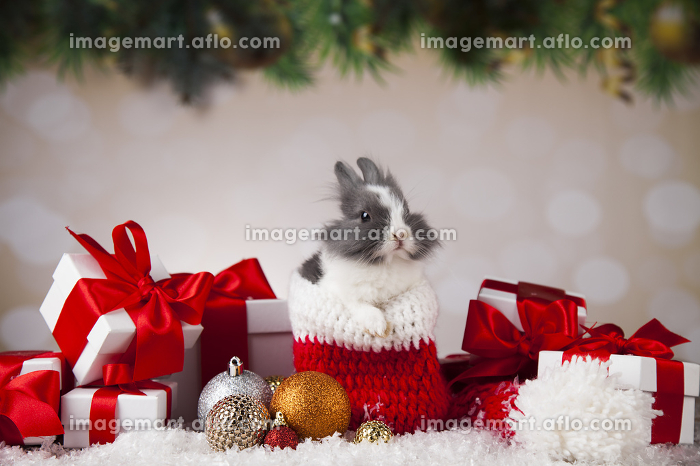Little bunny,Funny rabbit on Christmas background