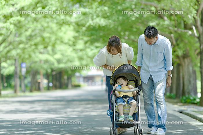 新緑の並木道を散歩する日本人家族