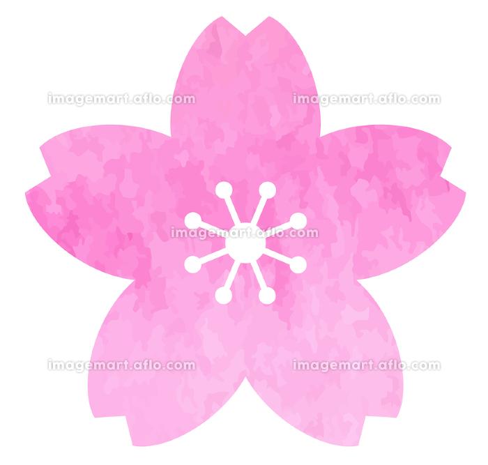 桜の花のアイコン 水彩テクスチャによるベクター素材の販売画像