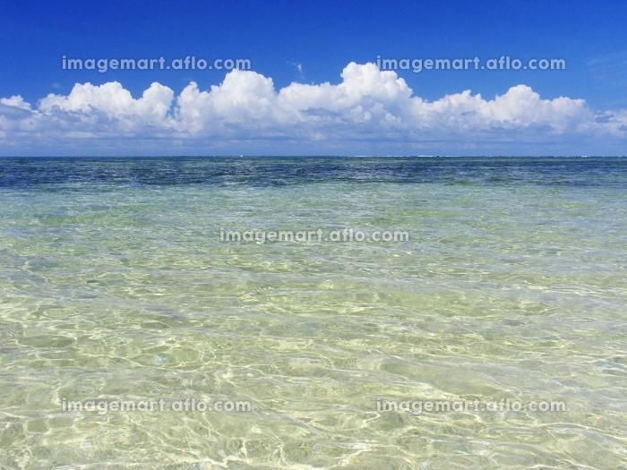 海の販売画像