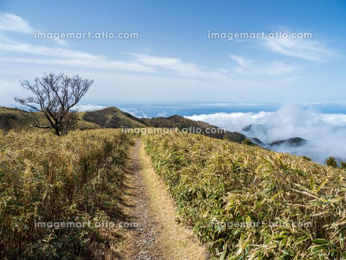 西伊豆 小達磨山登山道からの風景 3月の販売画像