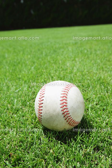 野球ボールと芝生の販売画像