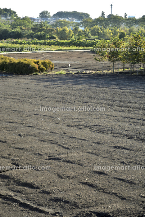 見沼田圃・耕作地の販売画像