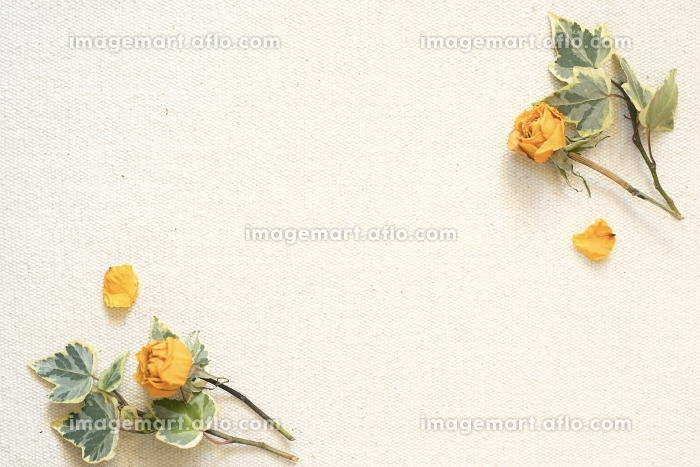 黄色いドライフラワー 背景素材の販売画像