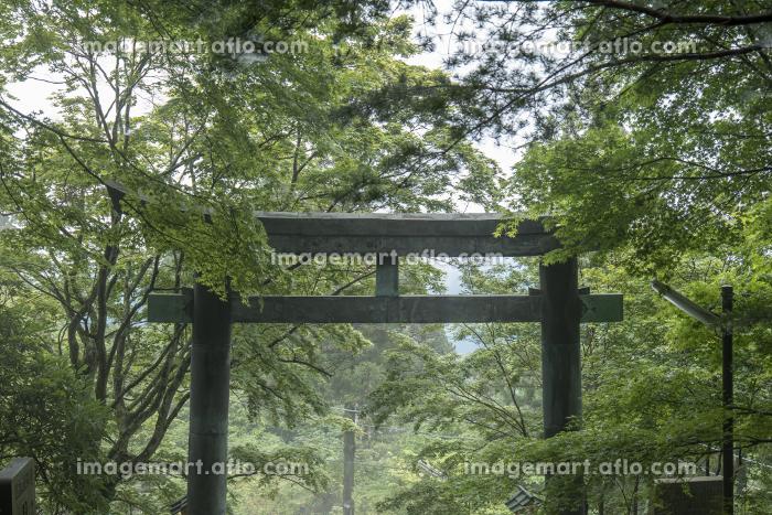 雨上がりの御岳神社の参道 東京都青梅市の販売画像