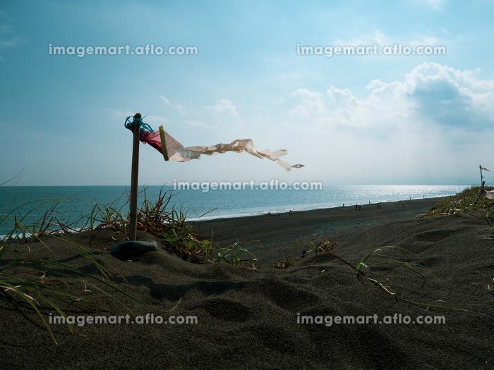 神奈川県大磯のこゆるぎの浜の風景の販売画像
