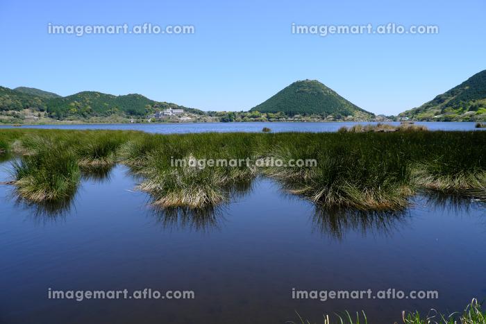 藺牟田池の湖に浮かぶ不思議な浮島の販売画像