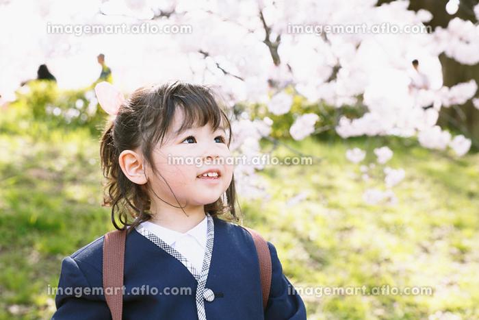 桜を見つめる幼稚園児の販売画像