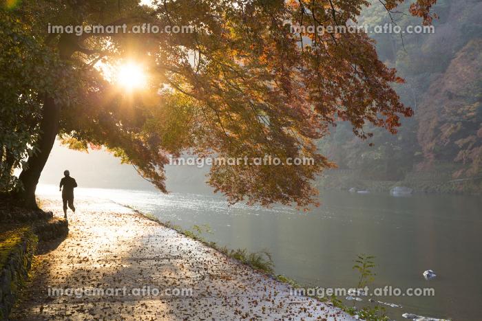 秋の京都嵐山の販売画像