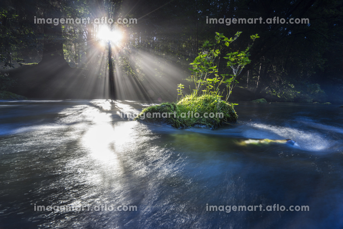 fog and sun breaking through the riverの販売画像