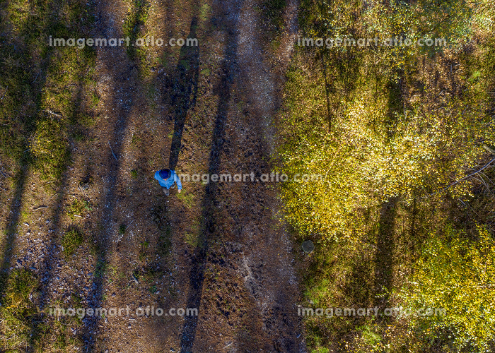 unrecognisable person walking in the wood/ forest shot from aboveの販売画像