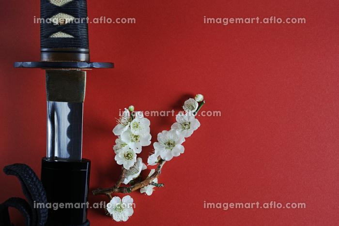 赤い背景に少し抜いた日本刀と白い花が咲いた梅の枝の販売画像