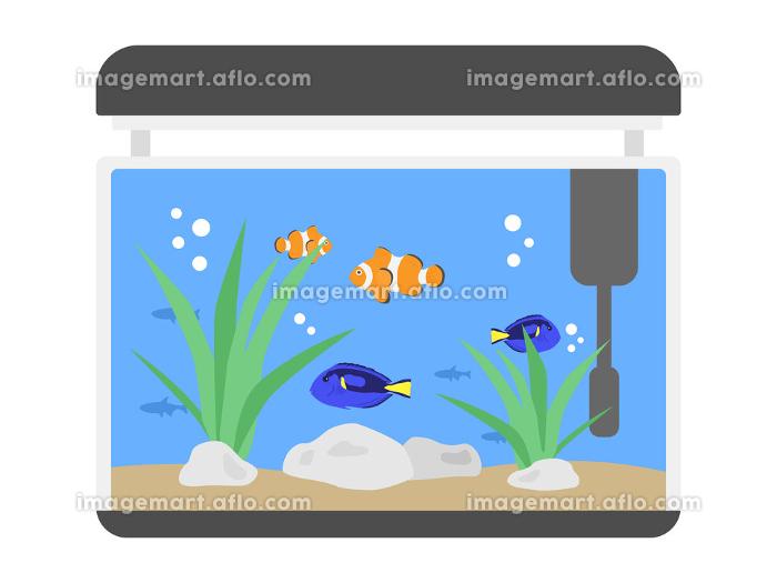 クマノミとナンヨウハギの水槽のイラストの販売画像