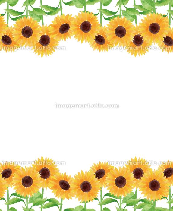 ひまわり ヒマワリ 向日葵 枠 フレーム 上下 夏 花 イラスト 手描きの販売画像
