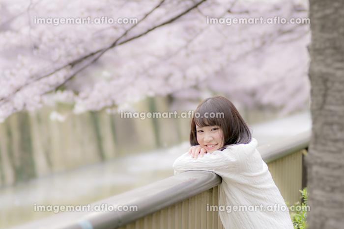 桜の木の下の女子高生の販売画像