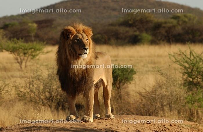 アフリカ 環境 墳丘の販売画像