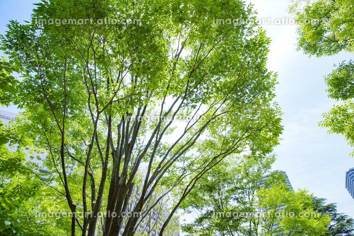 青空と新緑の背景素材の販売画像