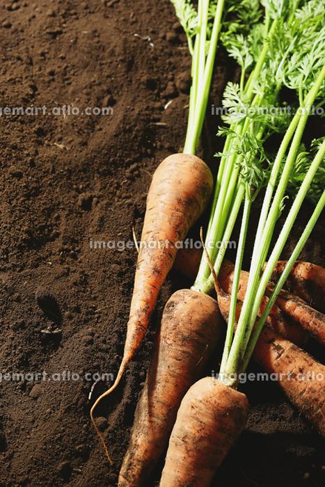 有機野菜 にんじんの販売画像
