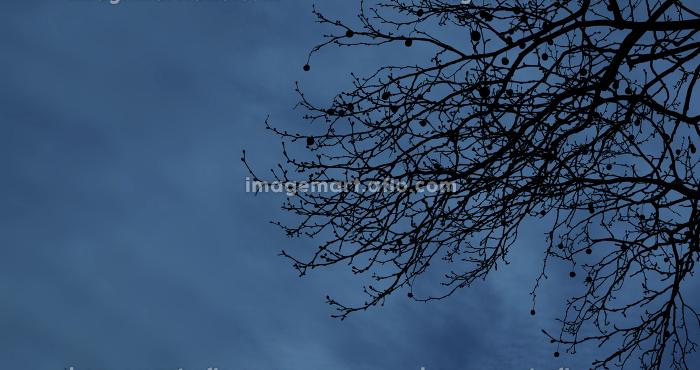 夜の枯れ枝 1612の販売画像