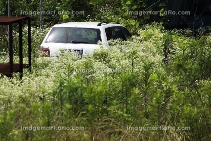 草むらに放置された乗用車の販売画像
