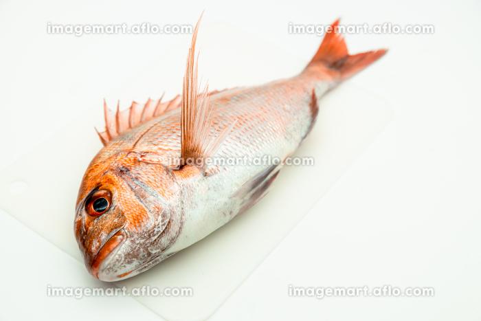 鹿児島県産の天然真鯛の販売画像