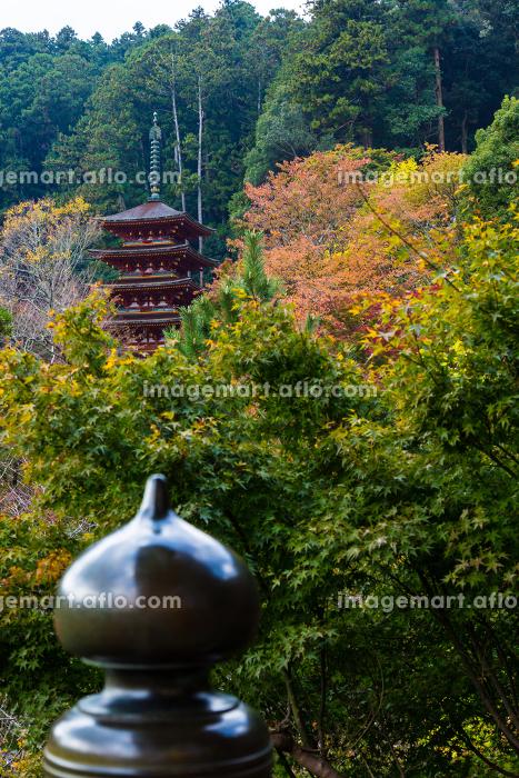長谷寺 (奈良県桜井市 2012/11/08撮影)の販売画像