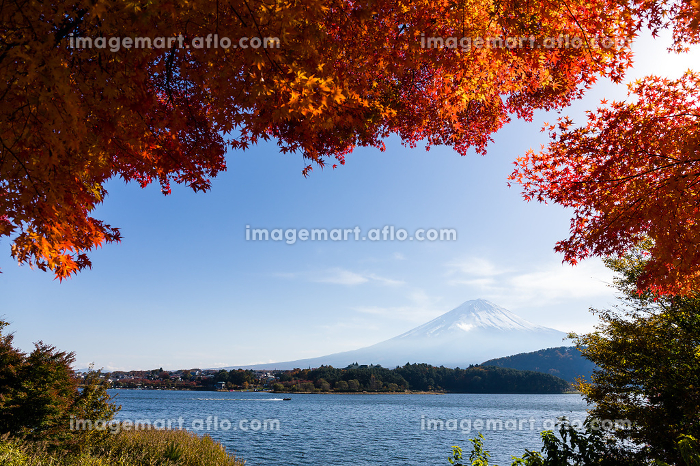 Mountain Fuji and maple in autumn