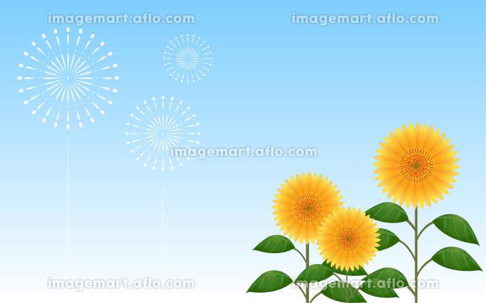 青空を背景にした向日葵と打ち上げ花火の販売画像