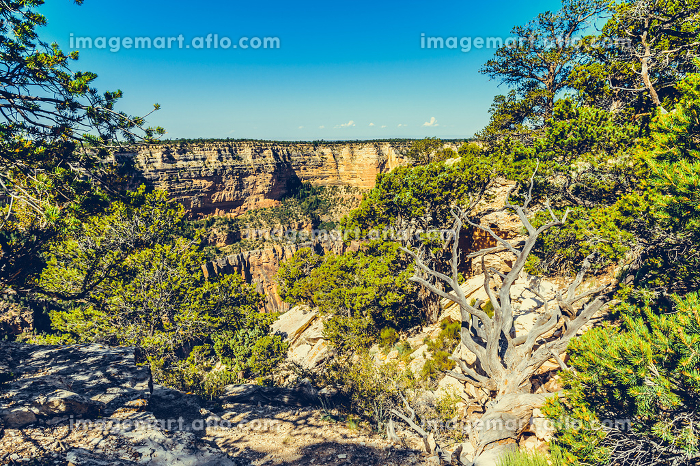 Grand Canyon view, Arizona, USAの販売画像