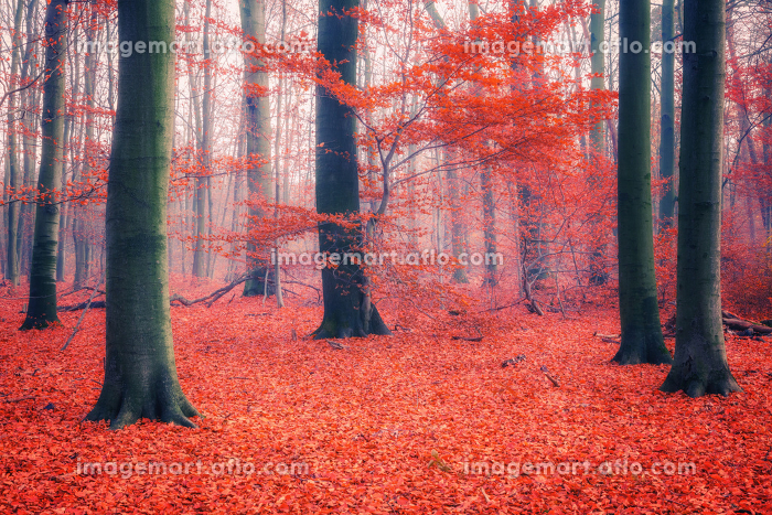 Colorful autumn forestの販売画像