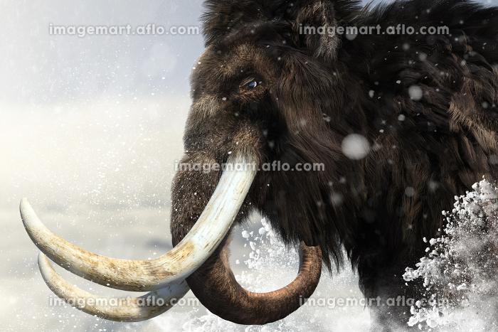 氷点下のもと吹雪のなか目的地に向かって歩く巨大で大きな牙を持つ雄のマンモスの販売画像