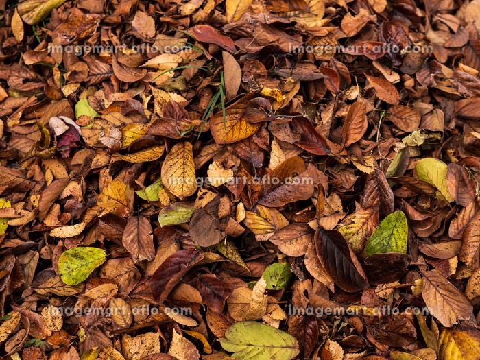 武蔵野の雑木林の風景 11月の販売画像