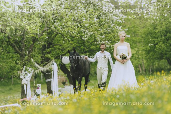 公園 庭 馬の販売画像