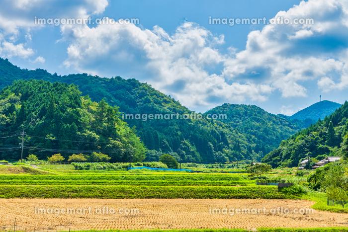夏ののどかな田園風景と山並みの販売画像