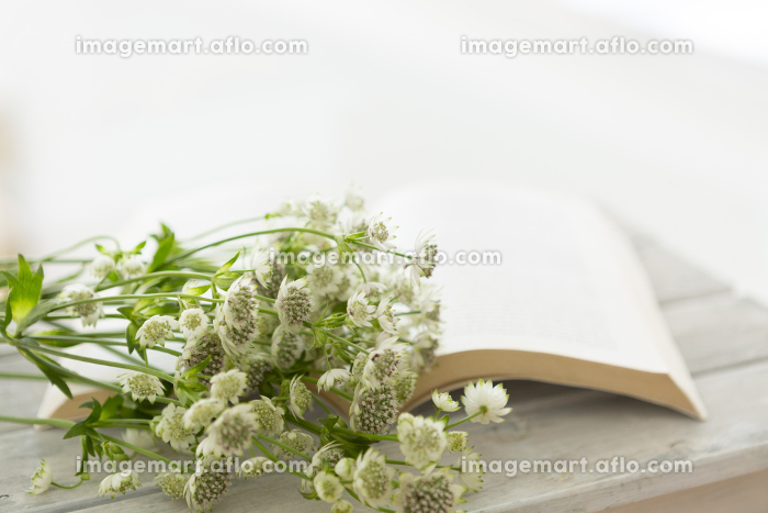 花イメージの販売画像