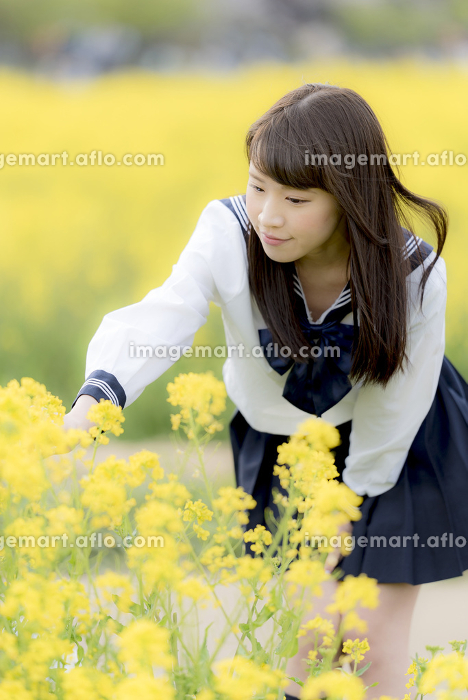 菜の花畑の中の女子高生
