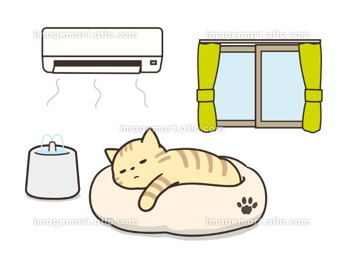 エアコンが付いた部屋で眠る猫 熱中症対策 給水器の販売画像