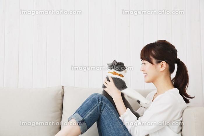 ソファで猫と遊ぶ日本人女性の販売画像