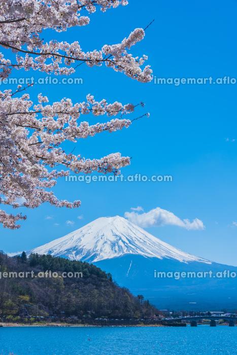 桜と富士山と河口湖の販売画像