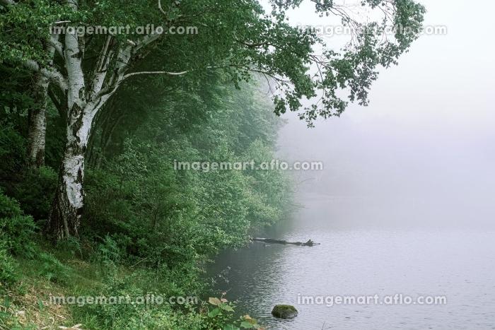 長野県・立科町 初夏の女神湖に漂う朝霧の風景の販売画像