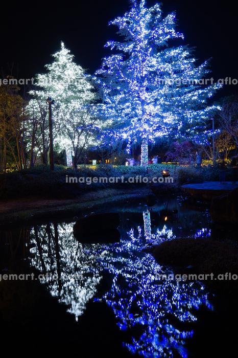 Nabana no Sato Illumination Event - Largest Winter Illumination Spots.の販売画像
