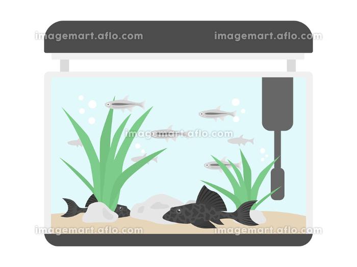 熱帯魚の水槽のイラストの販売画像